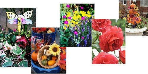 Examples of hot garden colors.